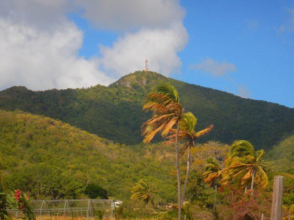 Antigua and Barbuda (26)