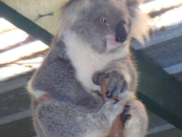 Australia (34)