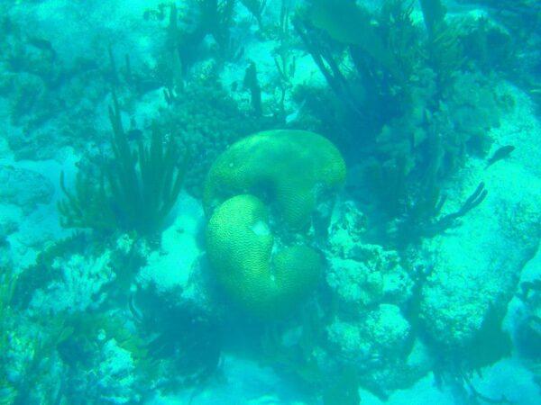 Belize (10)