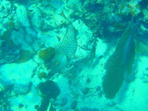 Belize (12)