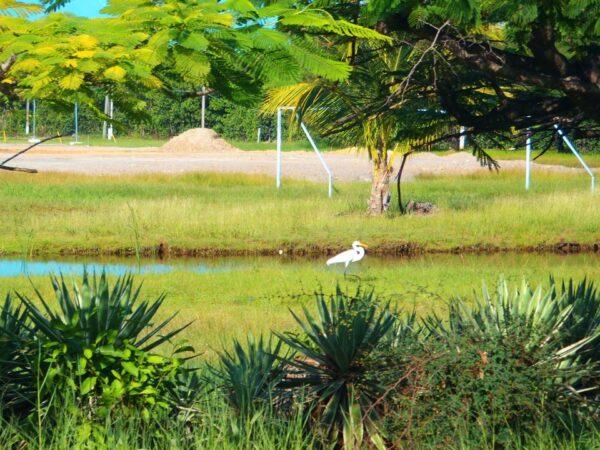 Belize (25)