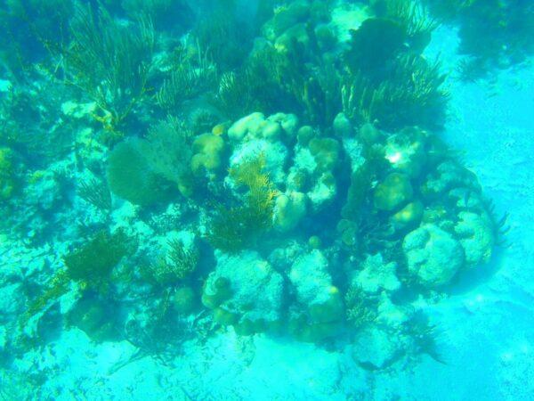 Belize (9)