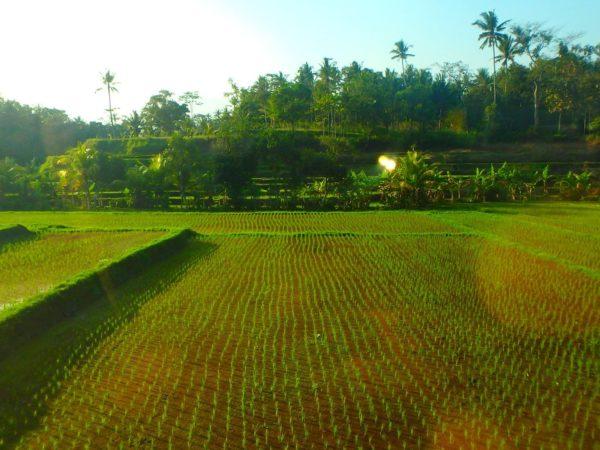 Indonesia (141)