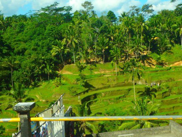 Indonesia (63)