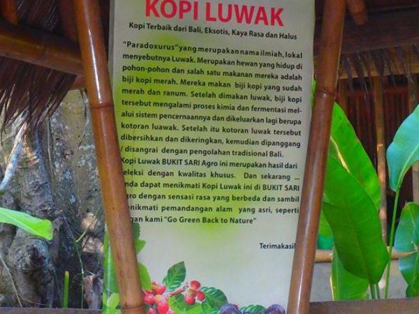 Indonesia (91)