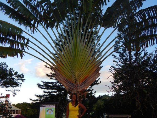Martinique (44)