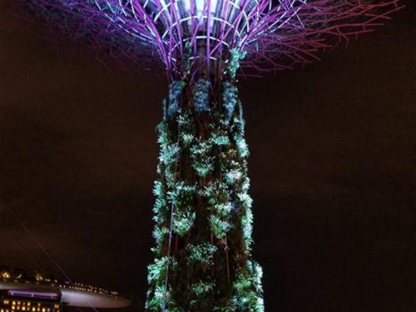Singapore (50)