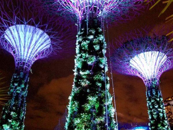 Singapore (61)