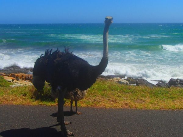 South Africa (41)