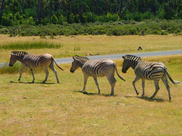 South Africa (63)