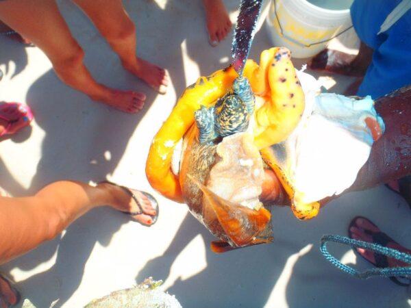 Turks and Caicos (53)