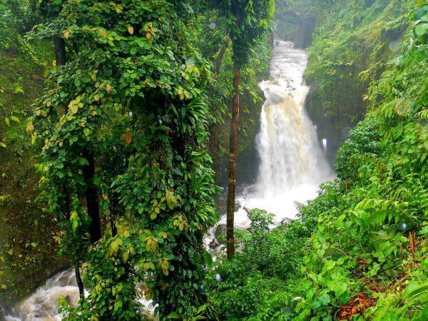 Dominica (96)