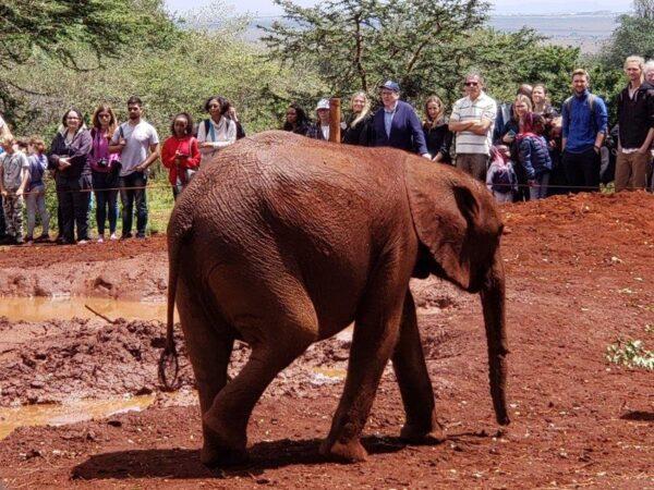 Kenya (61)