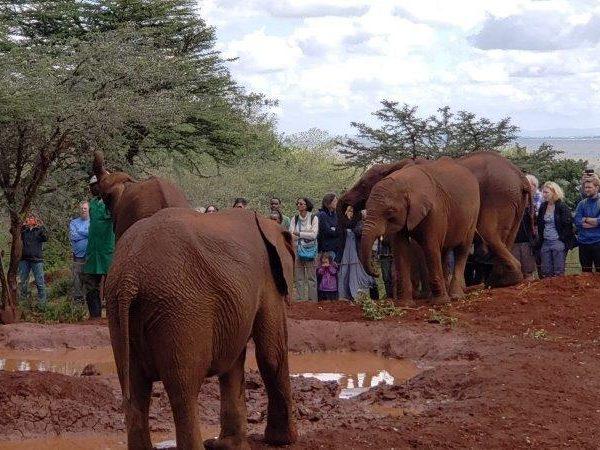 Kenya (62)