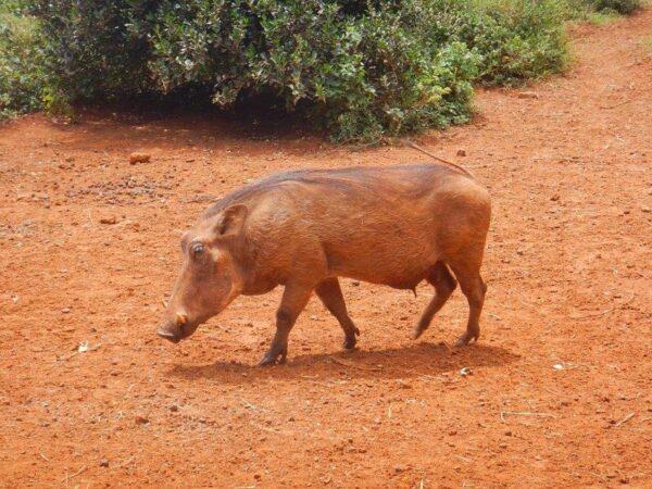 Kenya (70)