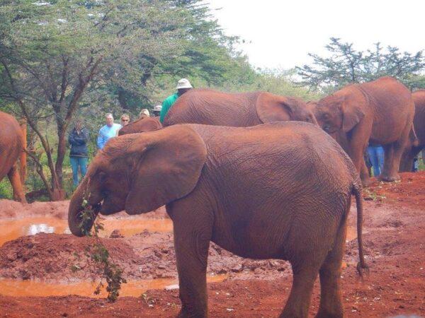 Kenya (90)